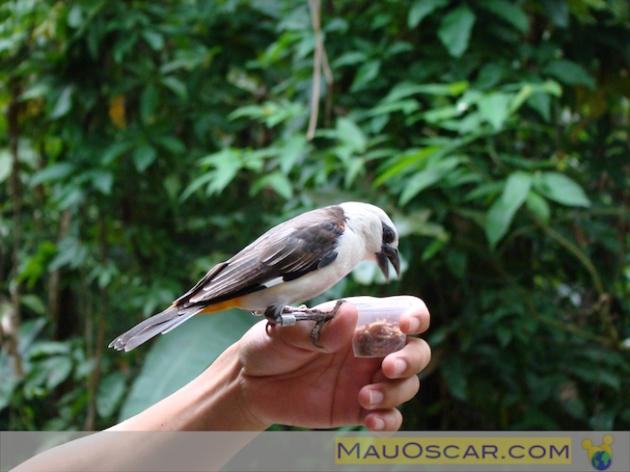 Jurong Bird Park10
