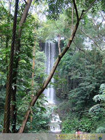 Jurong Bird Park11