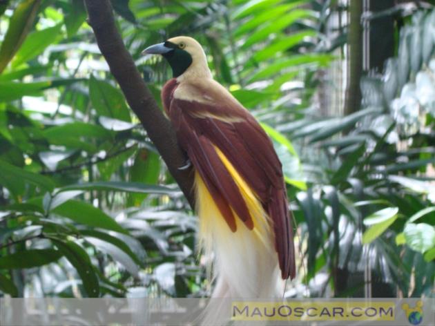 Jurong Bird Park12