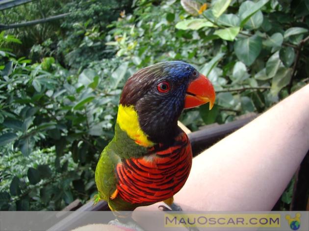Jurong Bird Park16