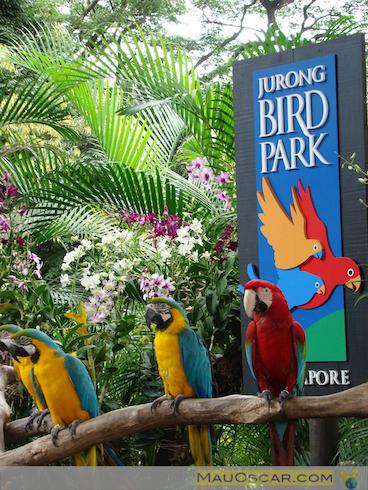 Jurong Bird Park4