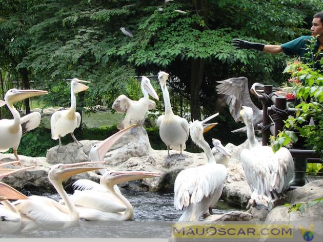 Jurong Bird Park5