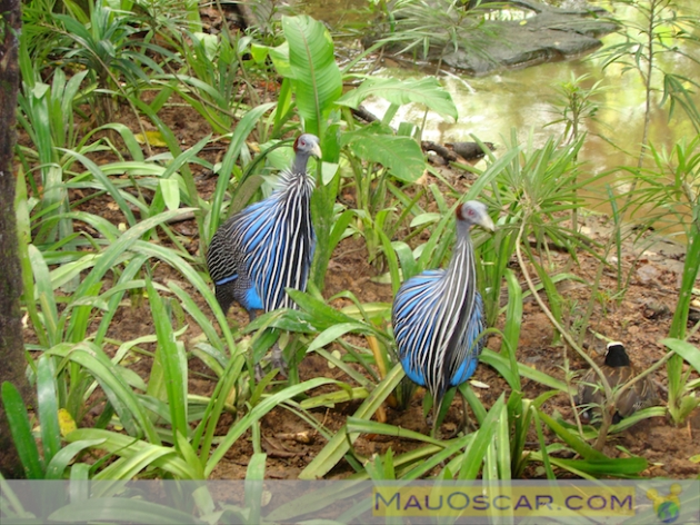 Jurong Bird Park8