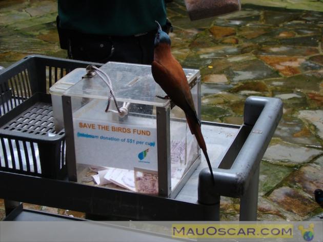 Jurong Bird Park9