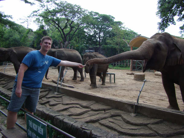Dando Comida ao Elefante