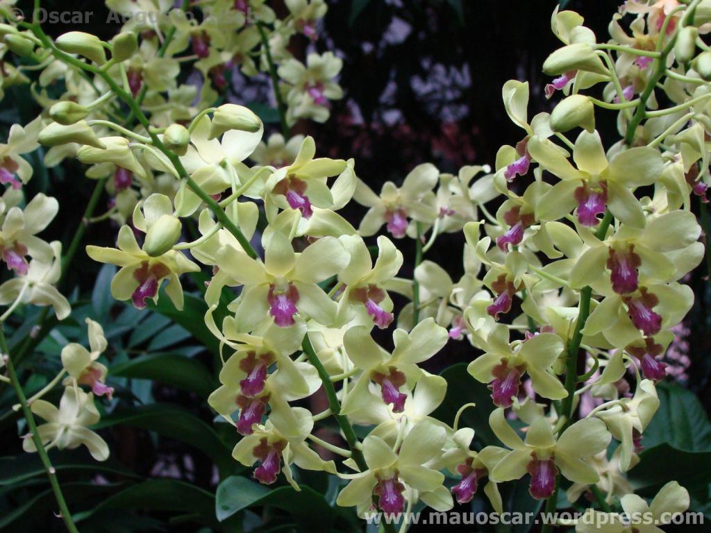 Jardim Botanico Cingapura (18)