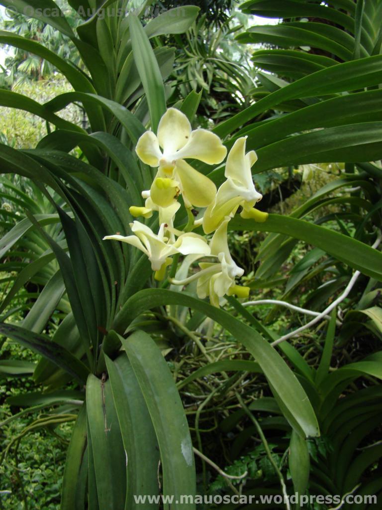 Jardim Botanico Cingapura (2)