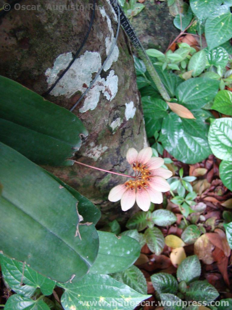 Jardim Botanico Cingapura (32)