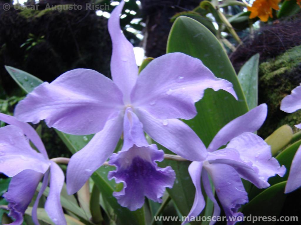 Jardim Botanico Cingapura (36)