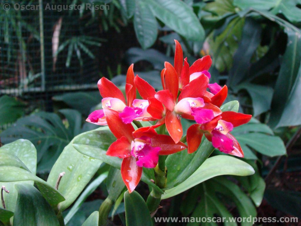Jardim Botanico Cingapura (38)