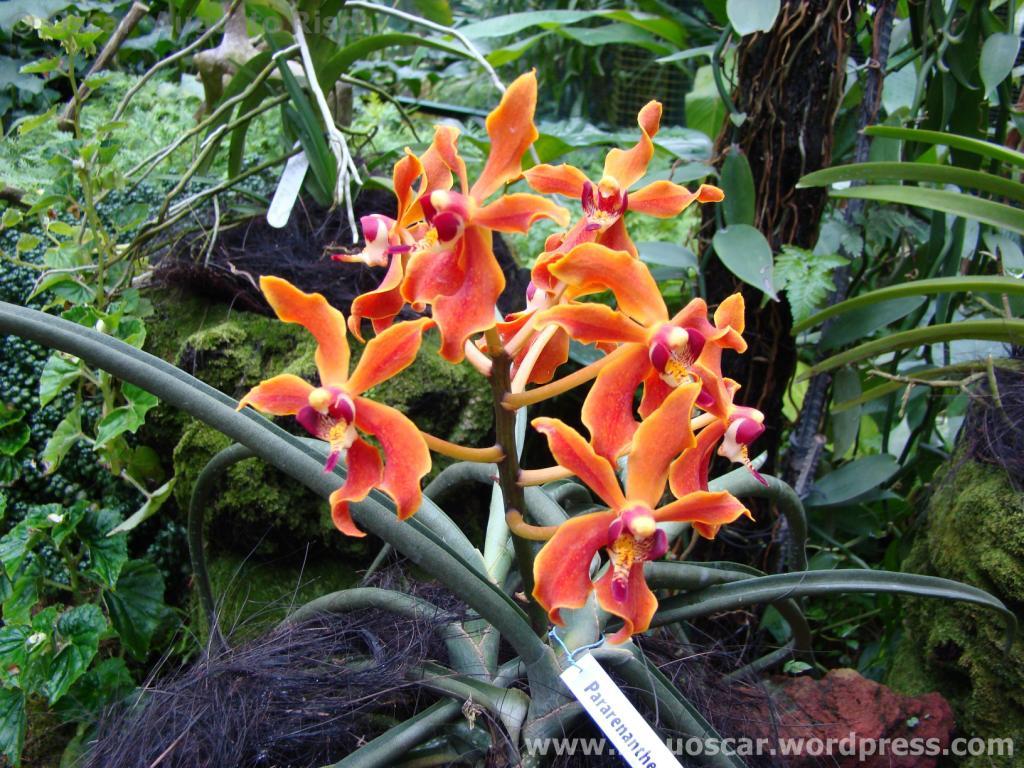 Jardim Botanico Cingapura (39)