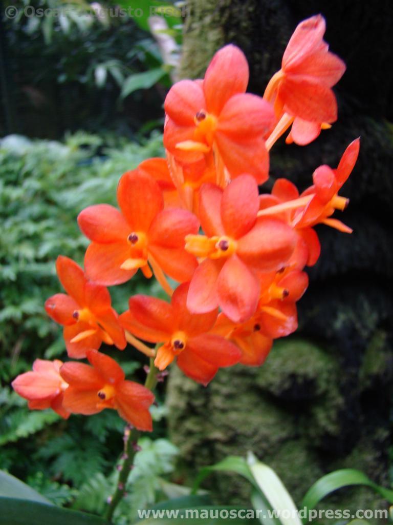 Jardim Botanico Cingapura (42)