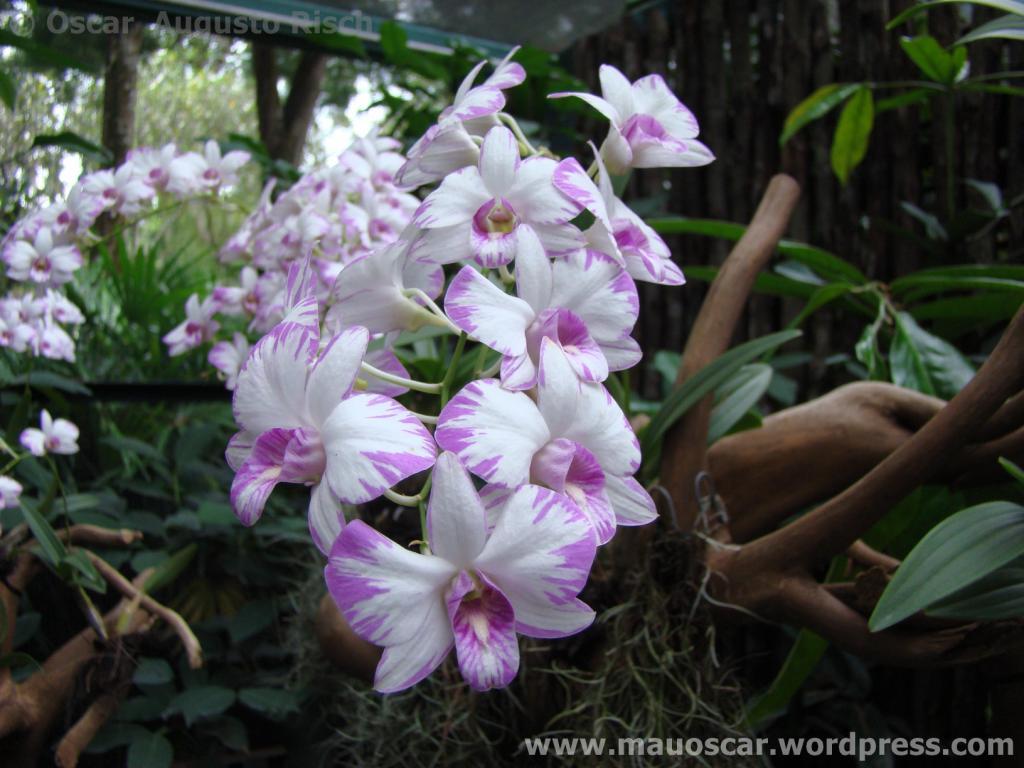Jardim Botanico Cingapura (44)