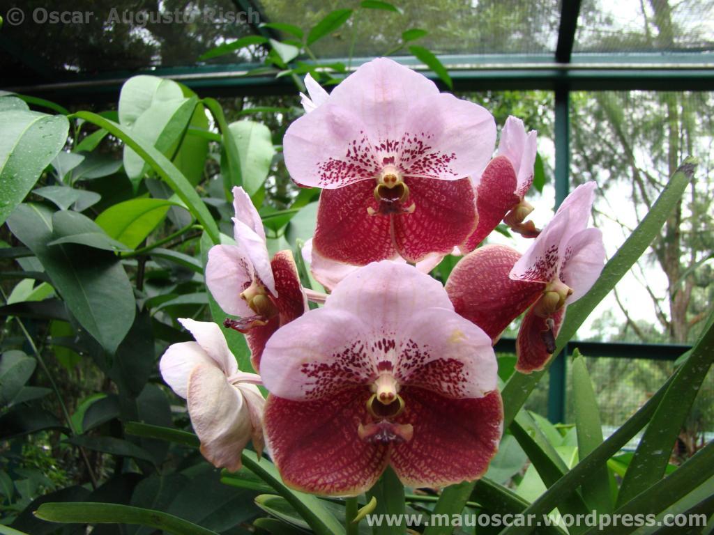 Jardim Botanico Cingapura (51)