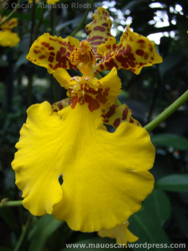 Jardim Botanico Cingapura (57)