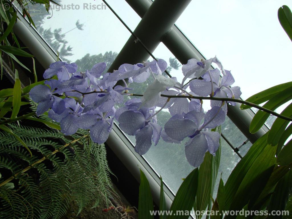 Jardim Botanico Cingapura (58)