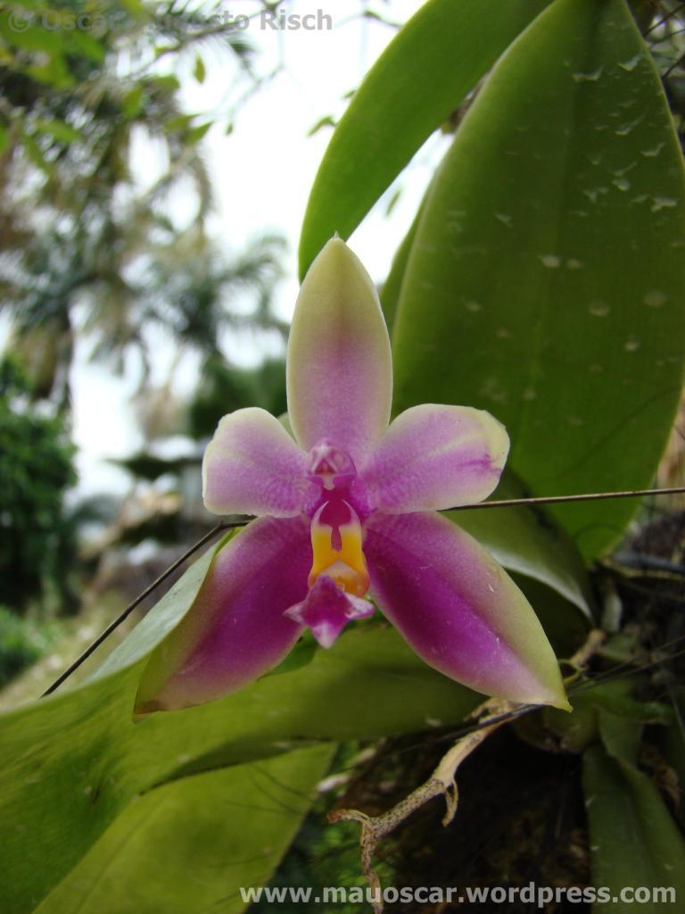 Jardim Botanico Cingapura (6)