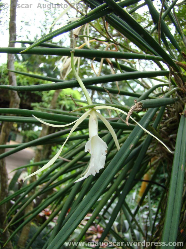 Jardim Botanico Cingapura (61)