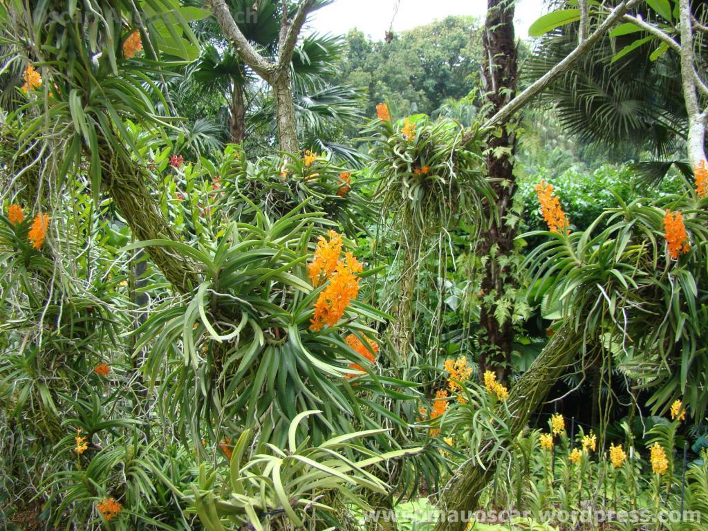 Jardim Botanico Cingapura (65)