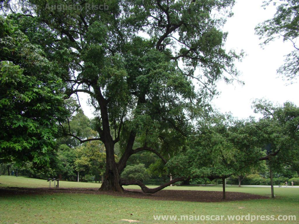 Jardim Botanico Cingapura (77)