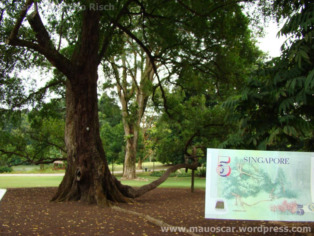 Jardim Botanico Cingapura (79)