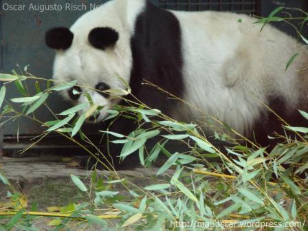 Zoo Berlin - Bao Bao
