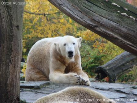 Zoo Berlin - Knut