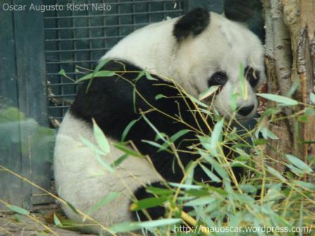 Zoo Berlin - Panda  Bao Bao