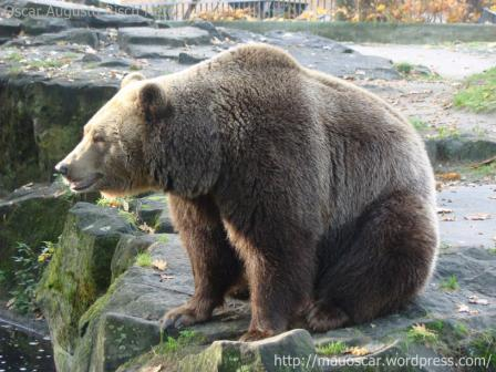 Zoo Berlin - Urso