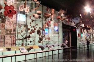 Hall da Biodiversidade