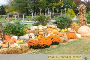 Abóboras Longwood Gardens 052