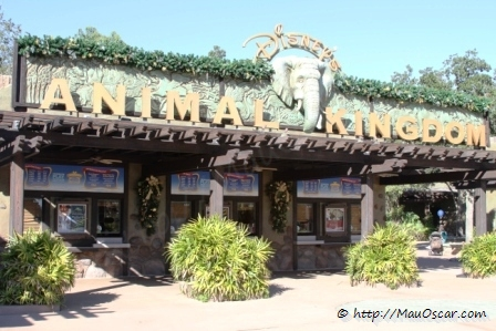 Animal Kingdom Orlando (1)