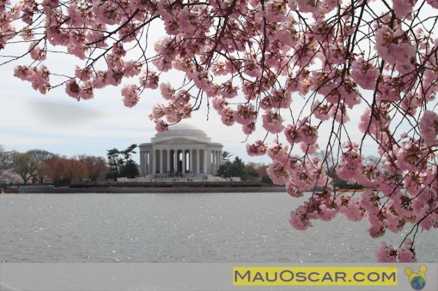 Primavera em Washington DC
