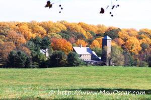 Outono nos EUA - Brandywine Valley em Delaware  (31)
