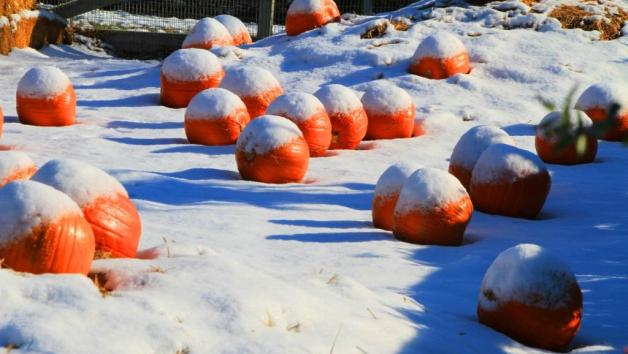 Abóboras de Halloween com neve