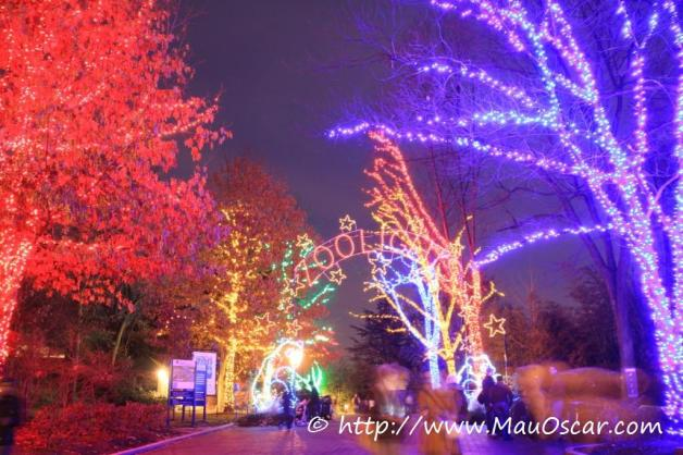 Zoolights Natal em Washington