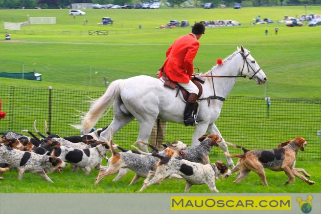 Fox Hounds no Point to Point