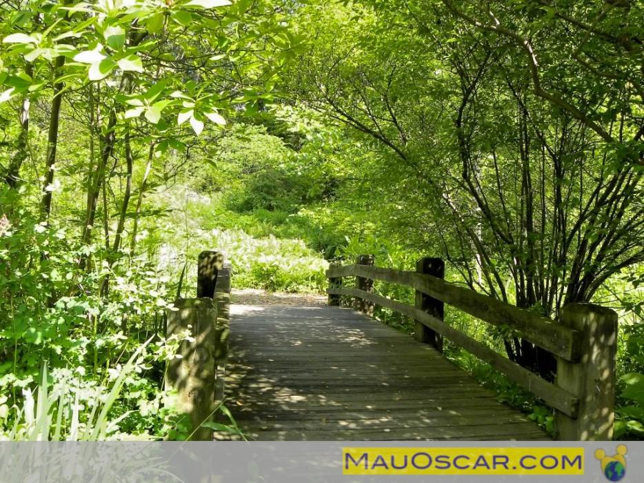 pedras jardim botanico: que levam ao interior da floresta do Jardim Botanico de Nova York