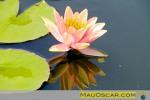 Post sobre Jardins de Monet