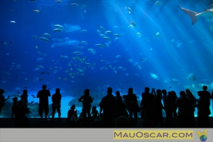 Visitantes no Georgia Aquarium em Atlanta