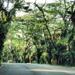 Arborização Cingapura