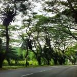 Arborização Urbana de Cingapura