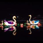 Chinese Gardens - Cisnes