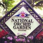 Jardim botânico de Cingapura - Jardim Nacional das Orquídeas