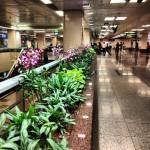 Metro de Cingapura enfeitado com orquideas