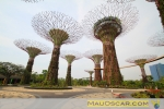 Super Trees Grove no Gardens by the Bay Cingapura