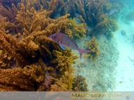 Goat Island Marine Reserve15