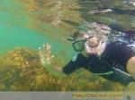 Snorkelling na Goat Island Marine Reserve